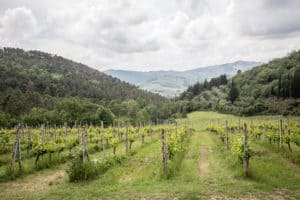 Chianti Half Day Tour from Florence