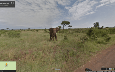 Get close to nature on these 12 virtual tours