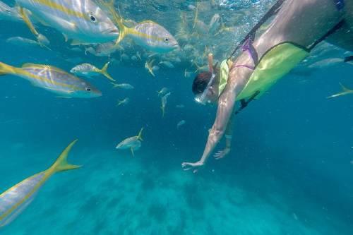 Key West Florida Reef Half-Day Snorkeling Excursion