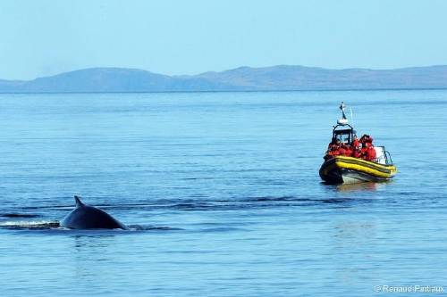 Small Group Whale Watching Cruise from Tadoussac or Baie-Ste-Catherine