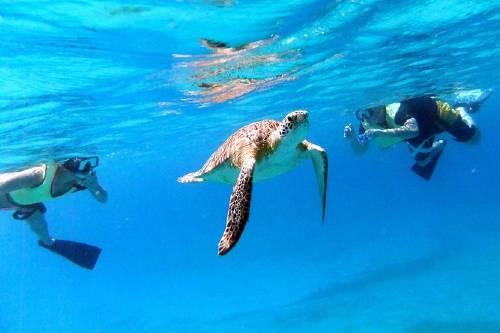 Turtle Cove Catamaran Snorkel and Sail Adventure at Buck Island