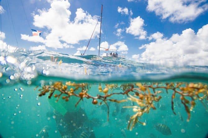 happy fish catamarans - Punta Cana Small-Group Sailing and Snorkeling Catamaran Tour